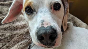Closeup of a dog's face and nose