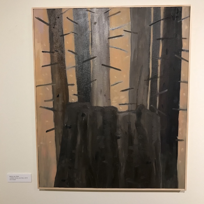 burned stump and trees with barren branches