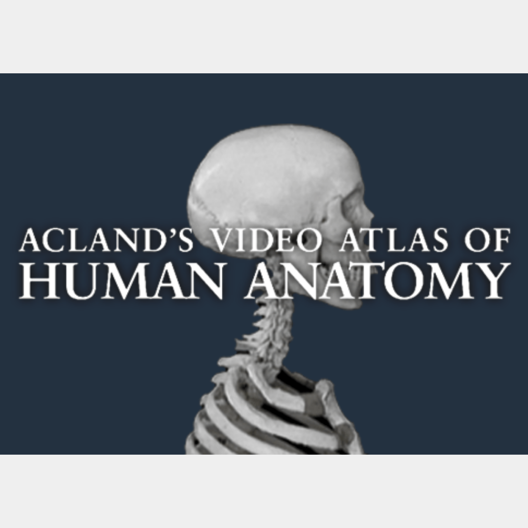 NEW DATABASE: Acland's Video Atlas of Human Anatomy