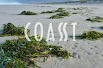 COASST (Coastal Observation and Seabird Survey Team)