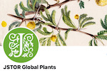 Global Plants