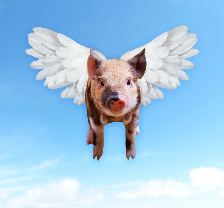 Pig with white wings