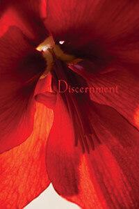 Than Discernment cover art