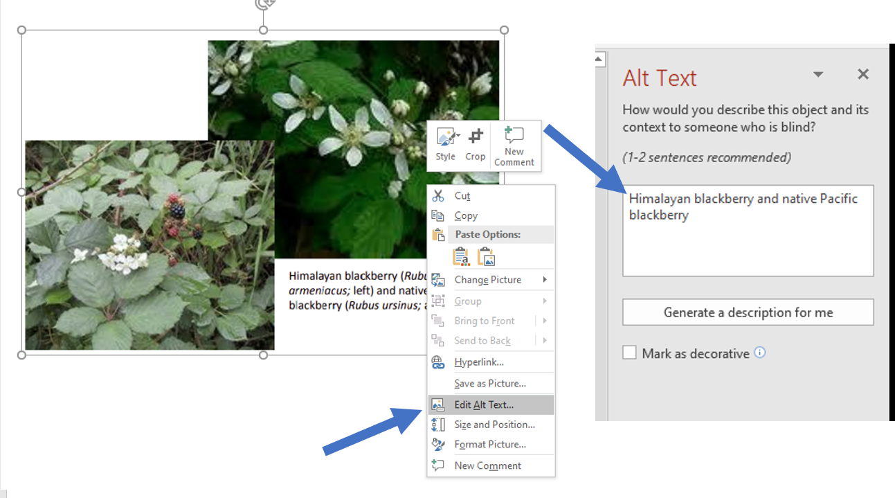 Screen shot of PowerPoint steps to add alt text to images