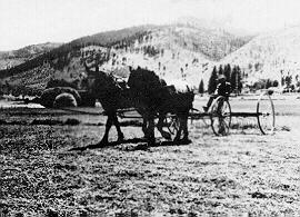 Horse drawn wagon of hay