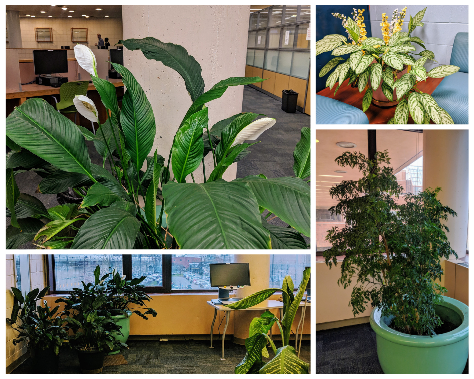tropical plants in library