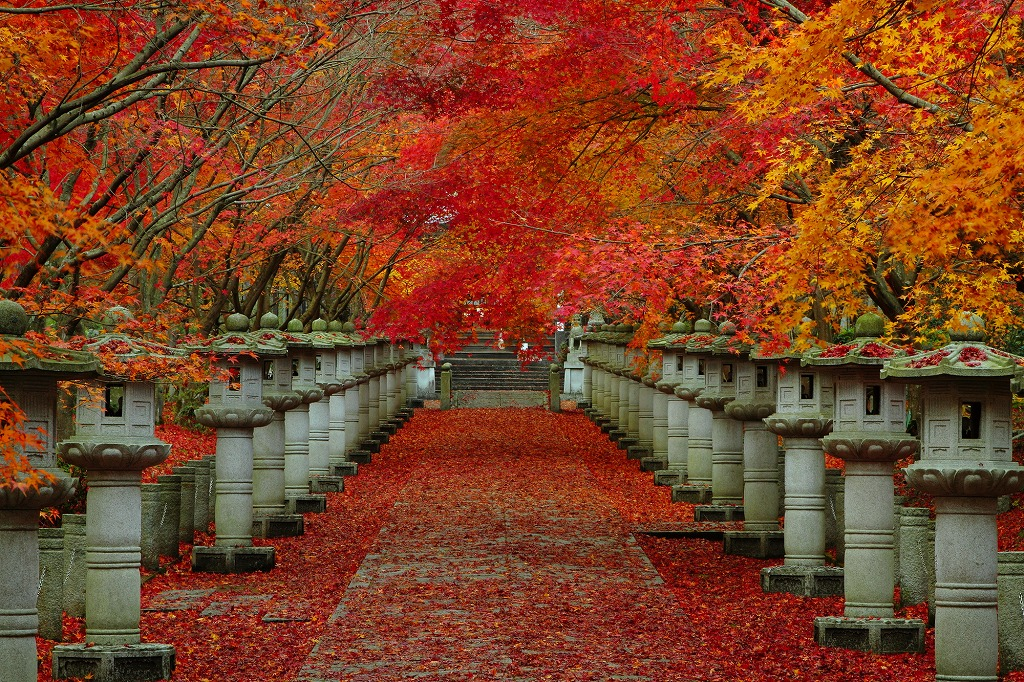 a path to a temple, beside the path, Autumn leaves