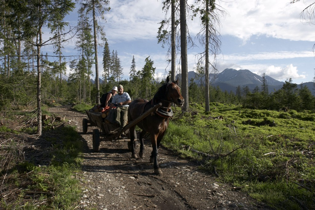 An image of the Tatras Mountains outside of the town Zakapone, Poland. A horse walks a dirt path pulling a wagon of logs and a man and woman.