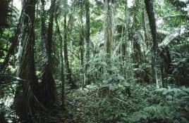 Rain forest in Peru