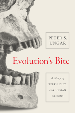 Evolution's bite : a story of teeth, diet, and human origins