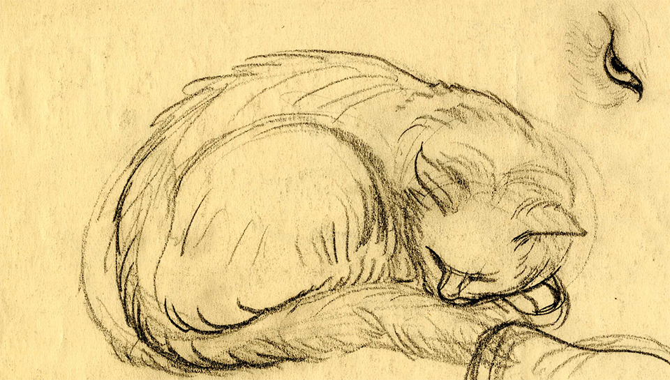 Cat Sketch from Burns Library Instagram