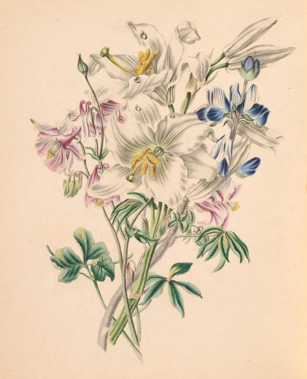 Columbine, White Lily and Lupine.