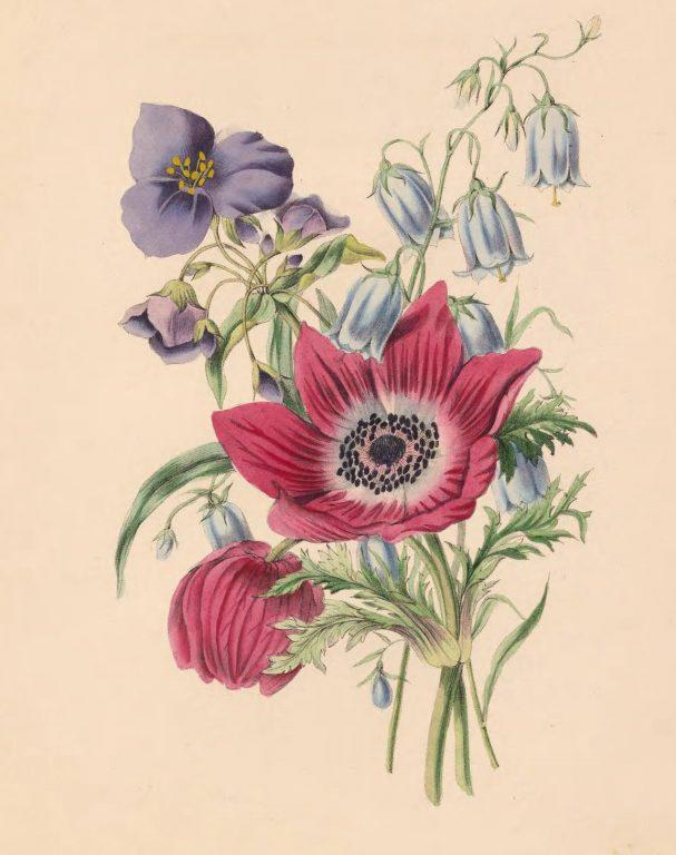 Anemone, Harebell, and Spiderwort.
