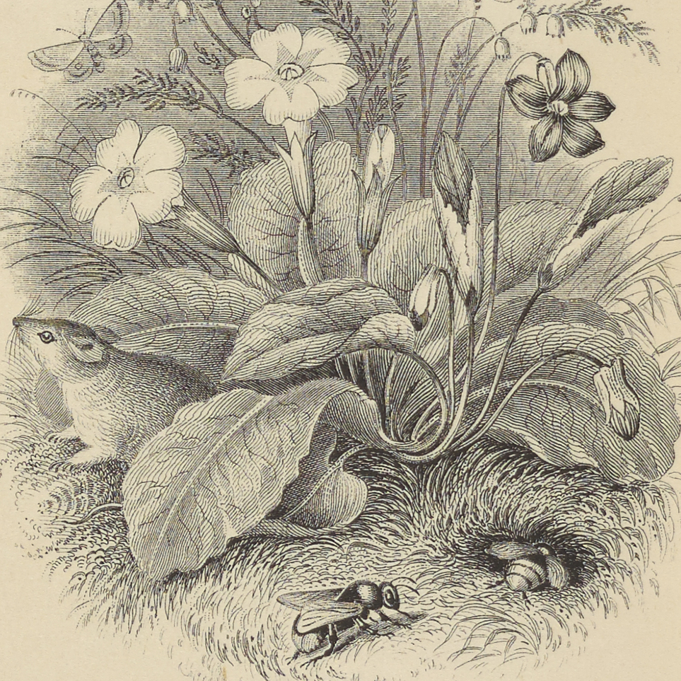 PoetryofFlowers1856-205418_008