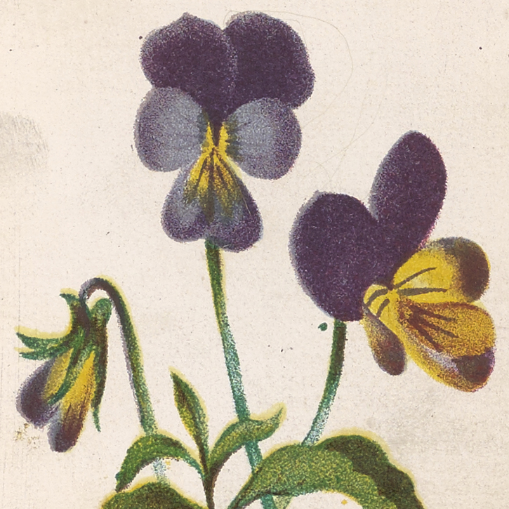 PoetryofFlowers1867-204754_105