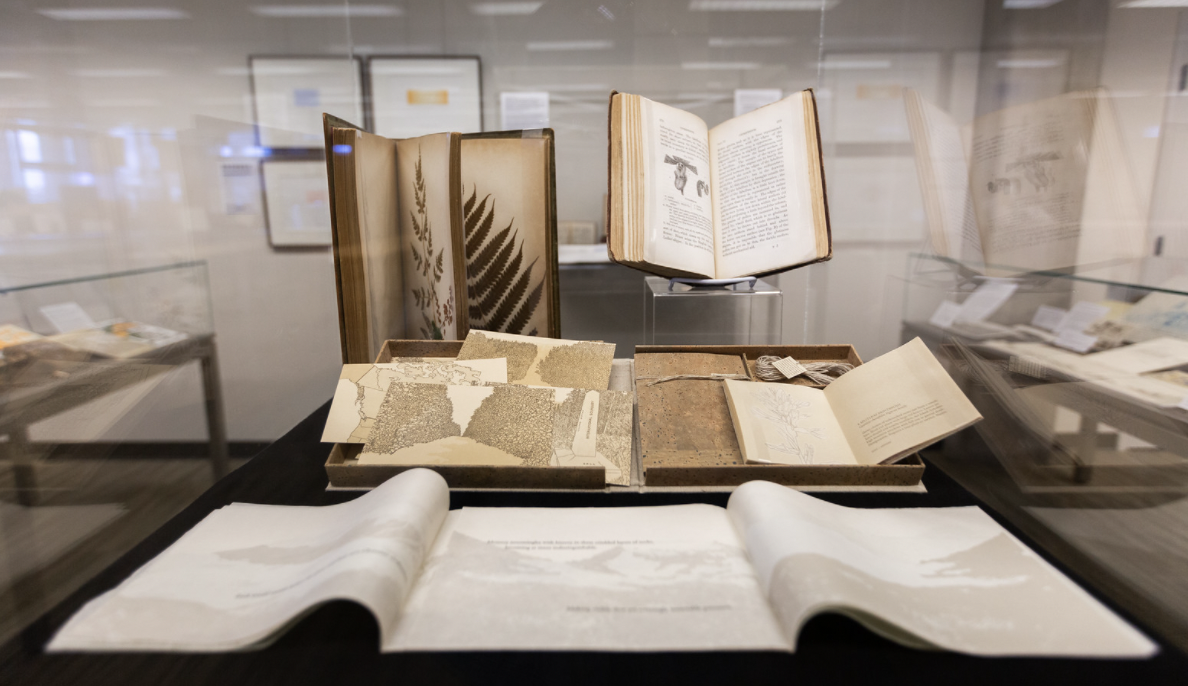 Pictured are selections from Fall 2019's Eye Candy and Mixed Nuts, presented by the Special Collections and Archives.