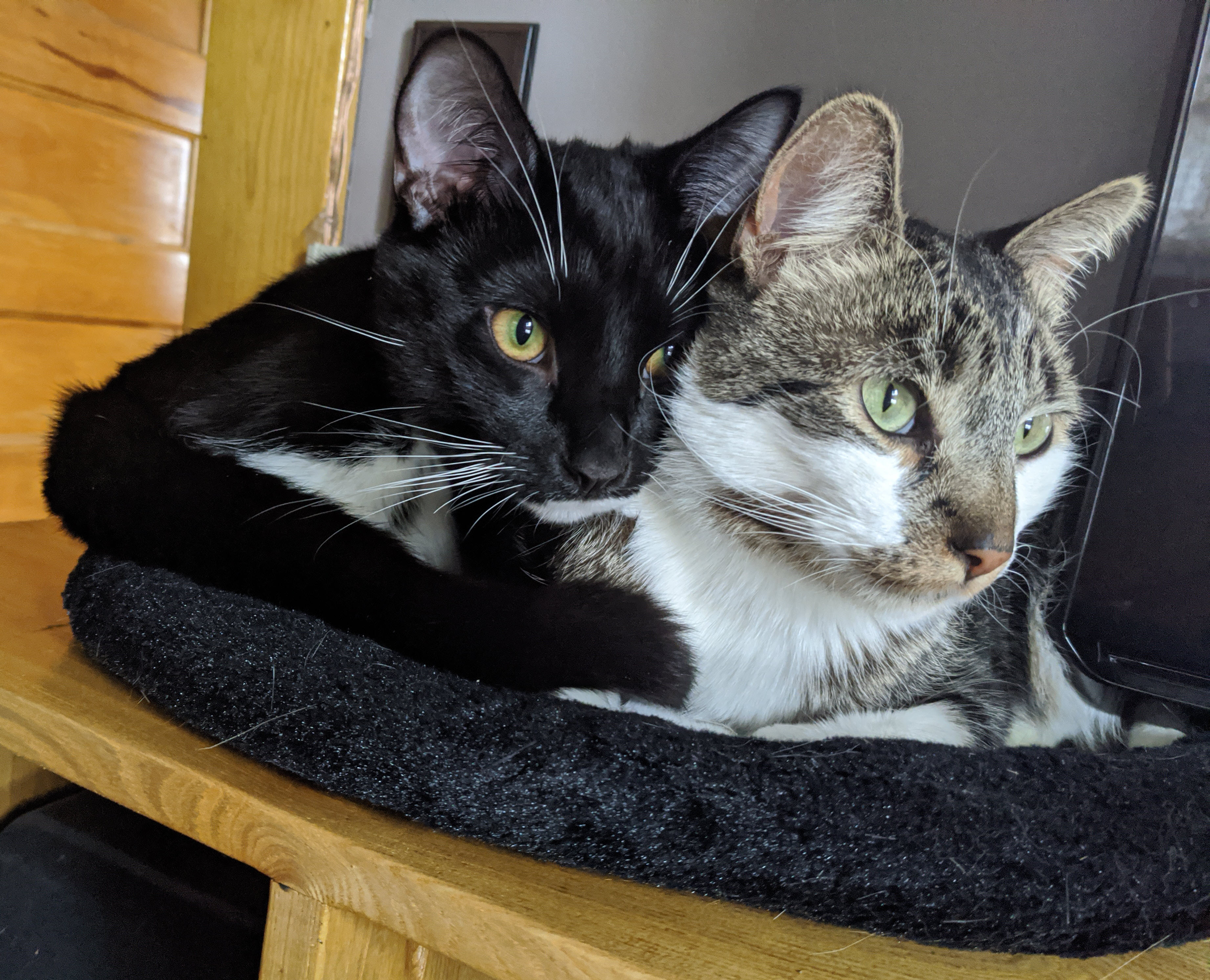 Two cats snuggling.