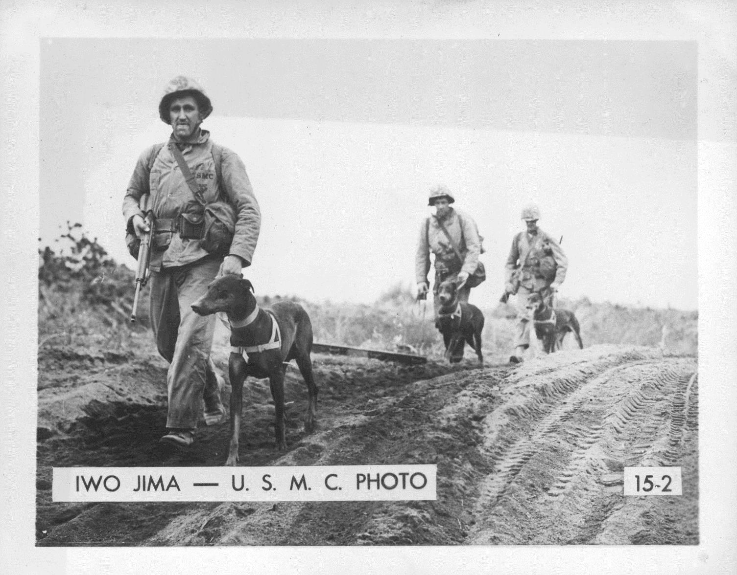 War dogs on Iwo