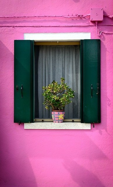 picture of purple window with a plant