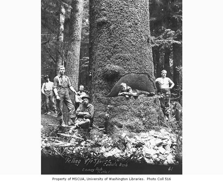 A large spruce tree with a young boy lying down in a large cut in the middle of the trunk and surrounded by five men posing for the photo in a forest.