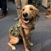 photo of military therapy and service dog