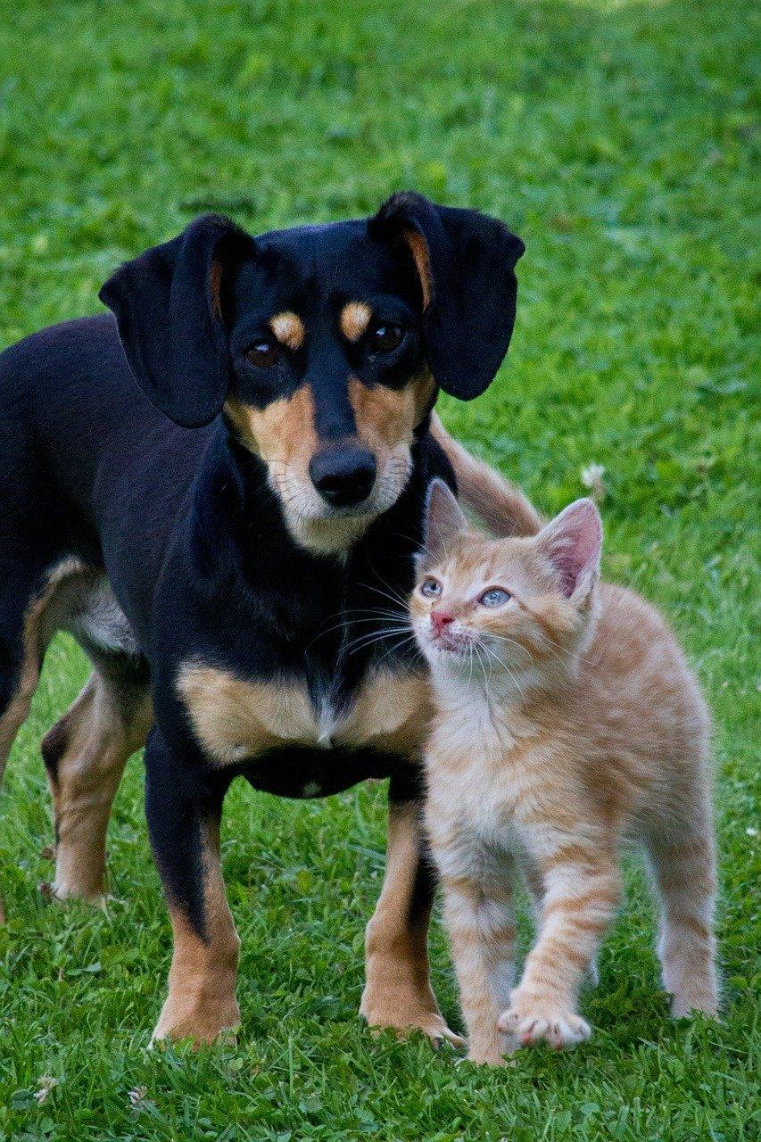 photo of black puppy with orange kitten
