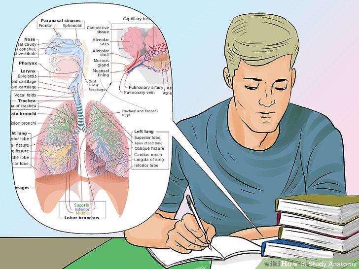 male student studying anatomy