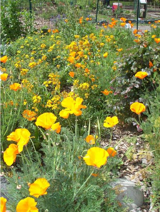 Brown Bag Speakers Forum: Adding Beautiful California Natives to Your Garden: with Alameda County Master Gardener Birgitt Evans