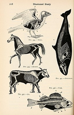 Page of a 1910 biology textbook with illustrations of the skeletons of a bird, horse, dolphin, ox, and fish.