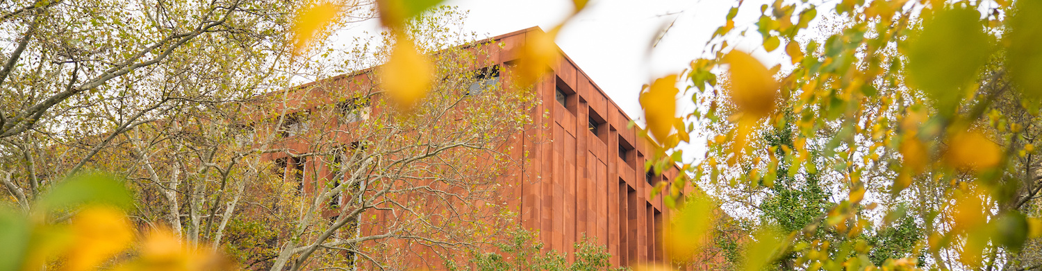 Looking up through yellow and green autumn leaves at the red stone exterior of Bobst Library.