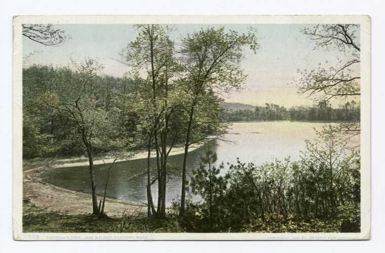 postcard of Thoreau's Cove, Lake Walden, Concord, Mass.