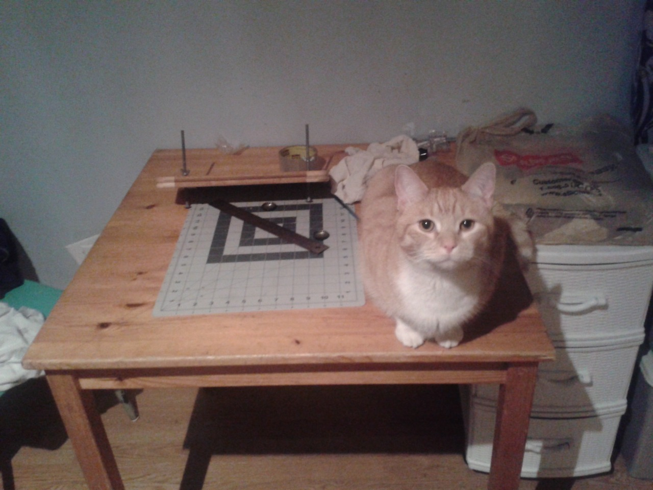 photo of a cat on a table with bookbinding supplies