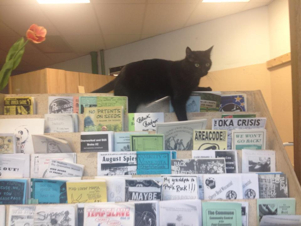 photo of a black cat named Harvey on a zine rack at an infoshop