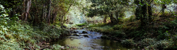 image of creek in woods