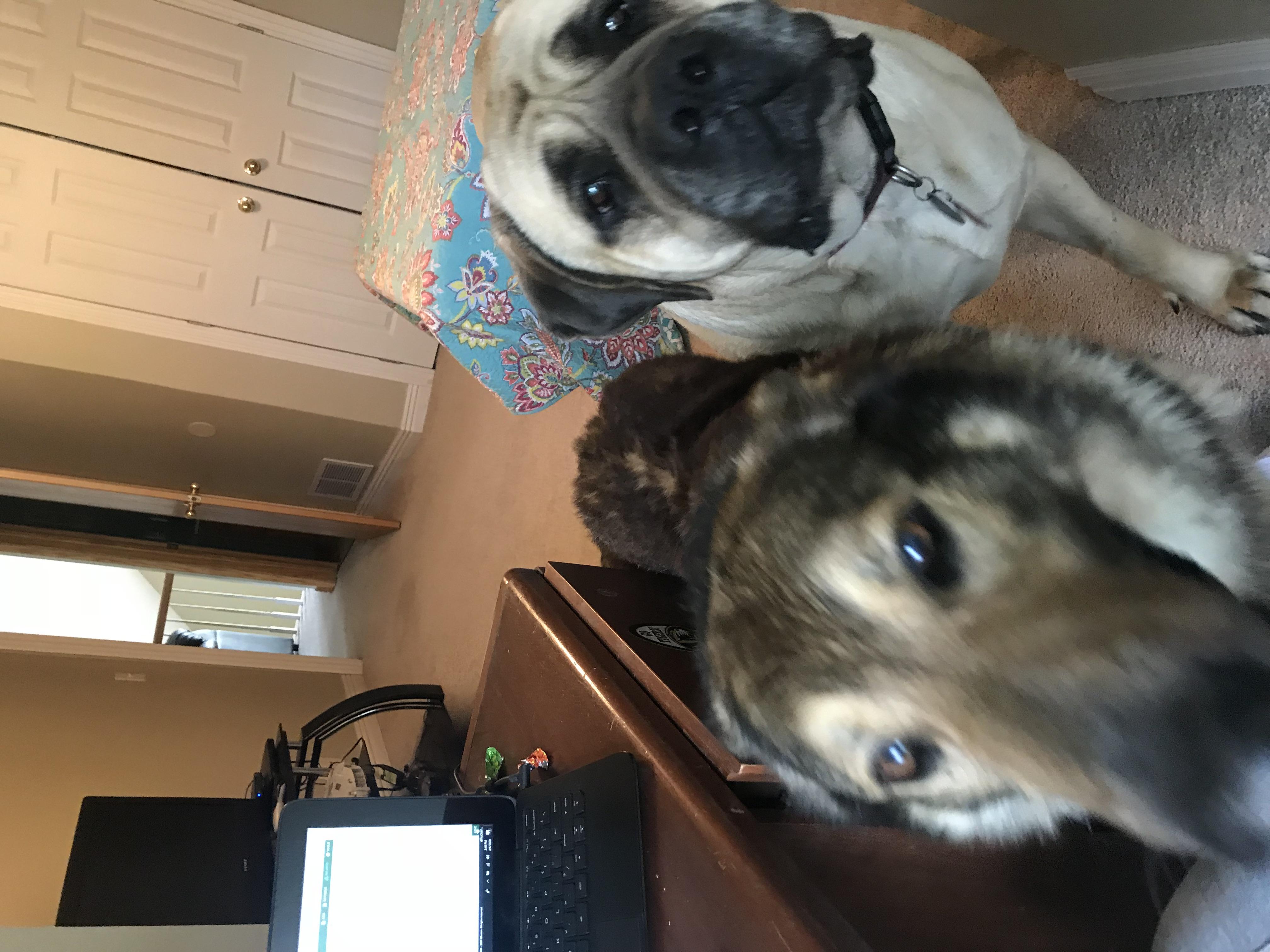 Cheryl Dobson's dogs