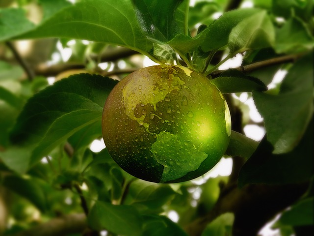 "Green Earth ""Fruit"" Hanging from a Tree"