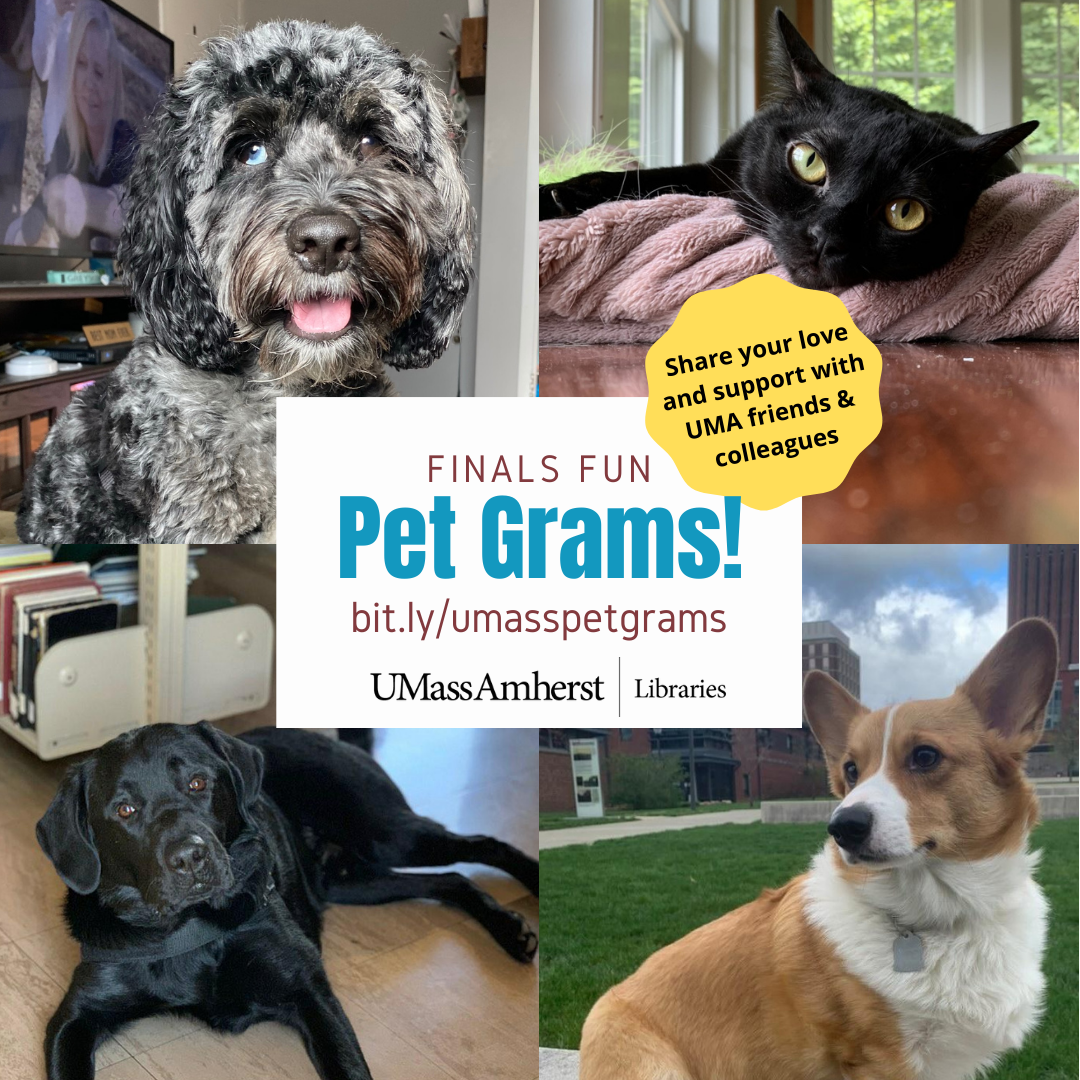 """Collage of 4 pictures: gray cockapoo, black cat, black Lab, and corgi. Text: """"Finals Fun Pet Grams! bit.ly/umasspetgrams. Share your love and support with UMA friends & colleagues."""" UMass Amherst Libraries logo."""