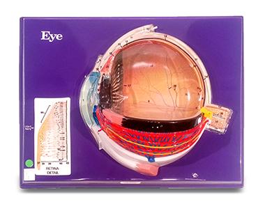 Eye (Hubbard)