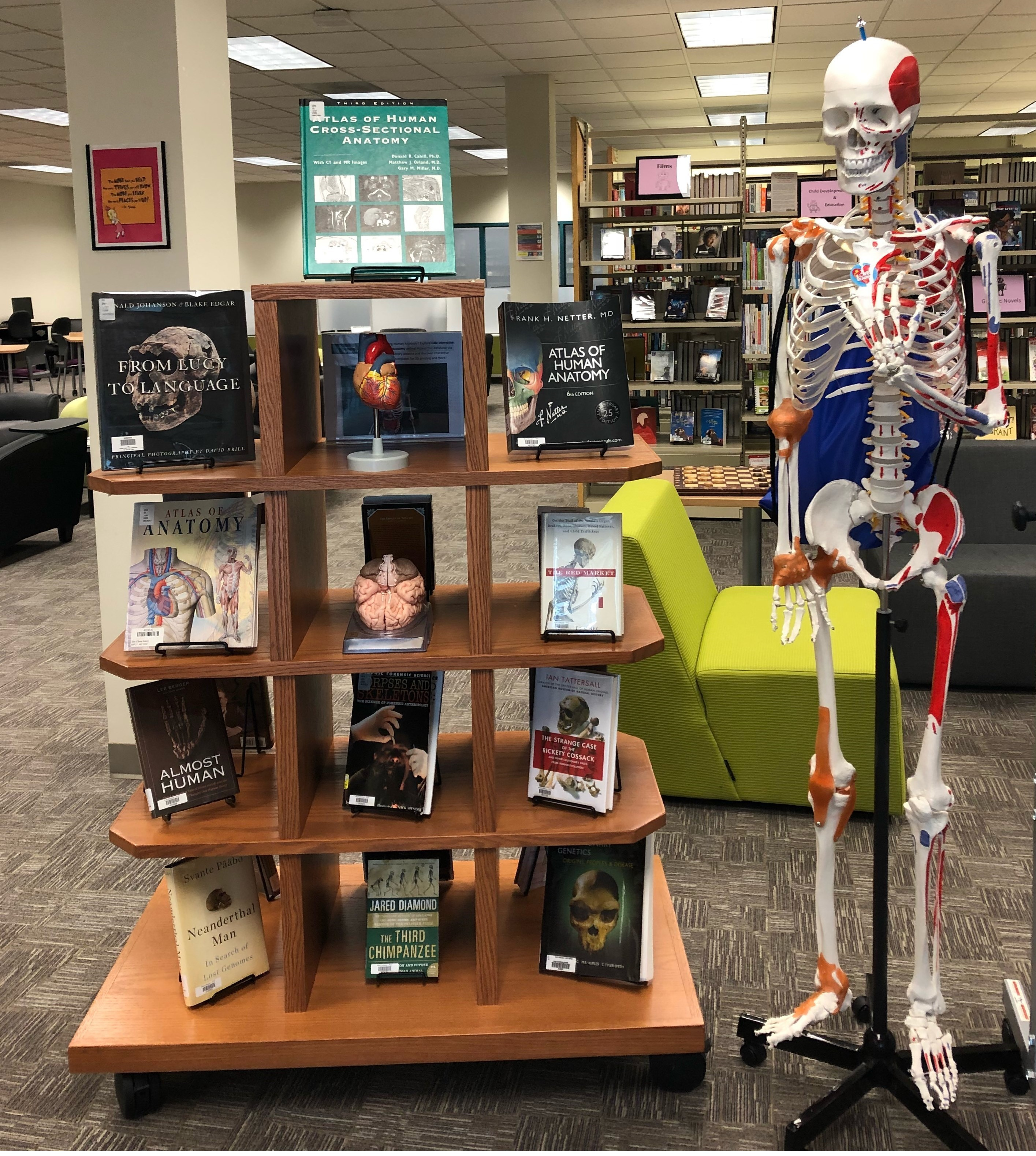 Books and skeletal model at West