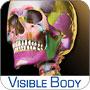 Skeleton Premium