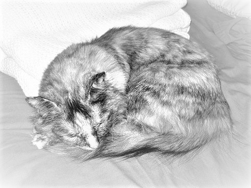 black and white image of a cat napping in a tight ball.