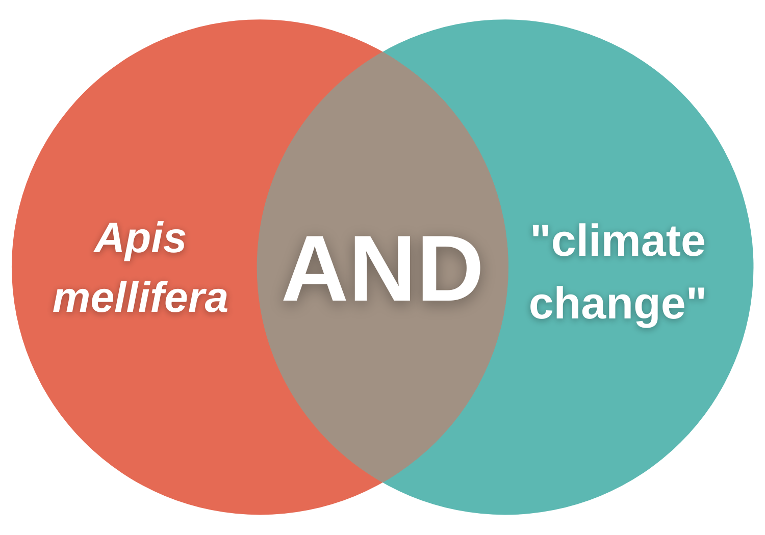 """Venn diagram with the phrase Apis mellifera on in the left circle, the Boolean operator AND in the middle, and the phrase """"climate change"""" in the right circle"""