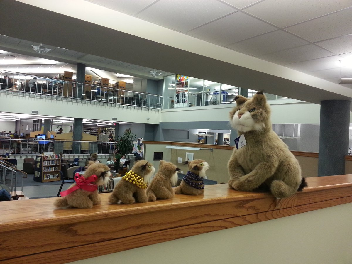 Rufus and the bobkittens sitting on a library shelf