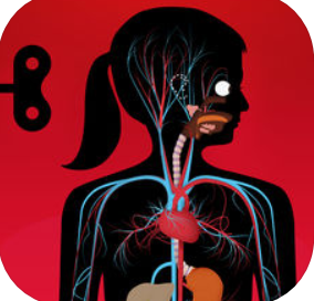 silhouette of a person with a ponytail with their head turned to the side, showing blood vessels and organs