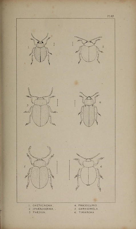Image of The British Coleoptera delineated...