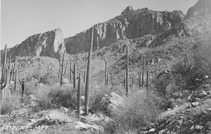 """View of Santa Catalina Mountain Range with Saguaro Cactus in Foreground."" UAL Special Collections."
