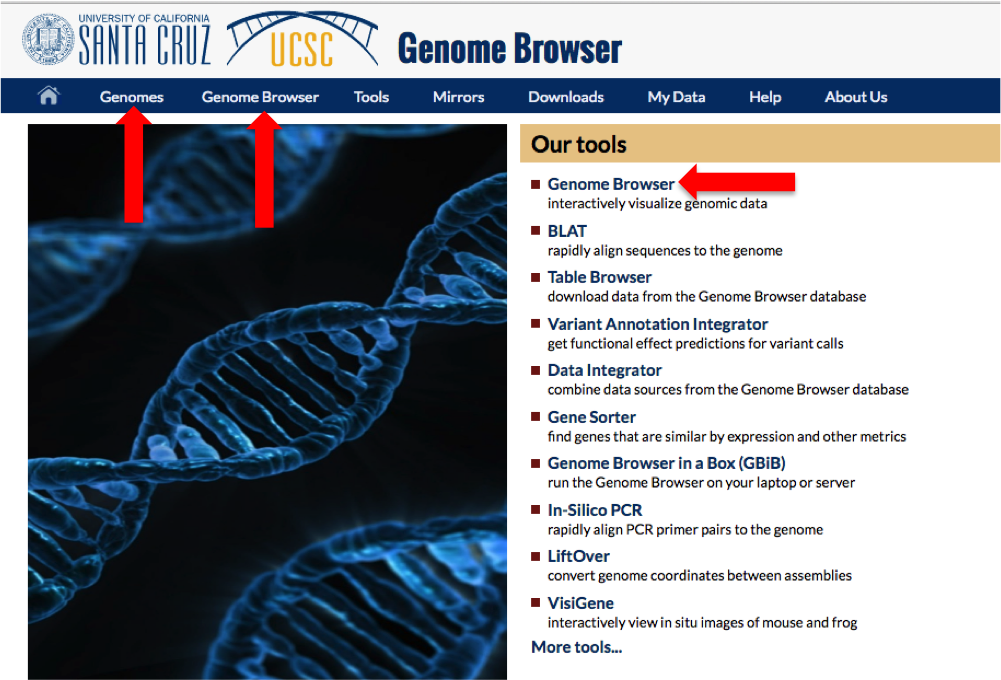 Screenshot of the UCSC Genome Browser Homepage.