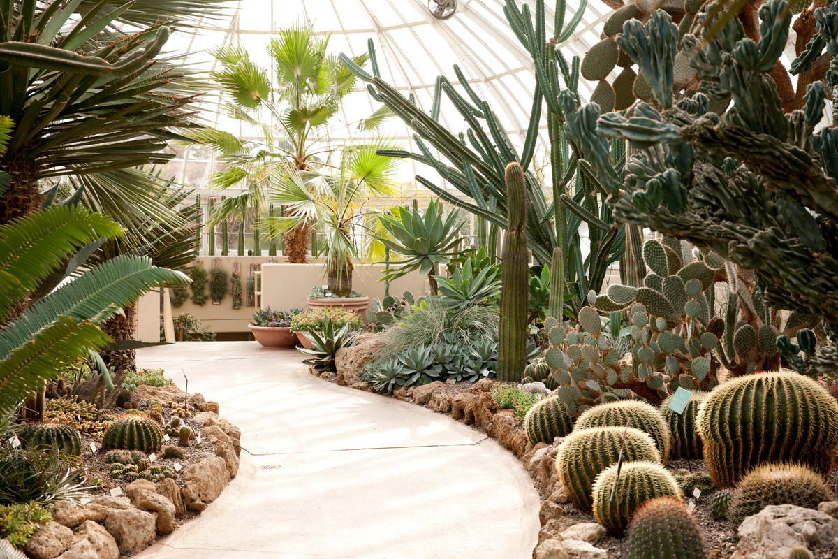 Cacti in the beds of the Haupt Conservatory at NYBG; photo courtesy of Ivo Vermeulen