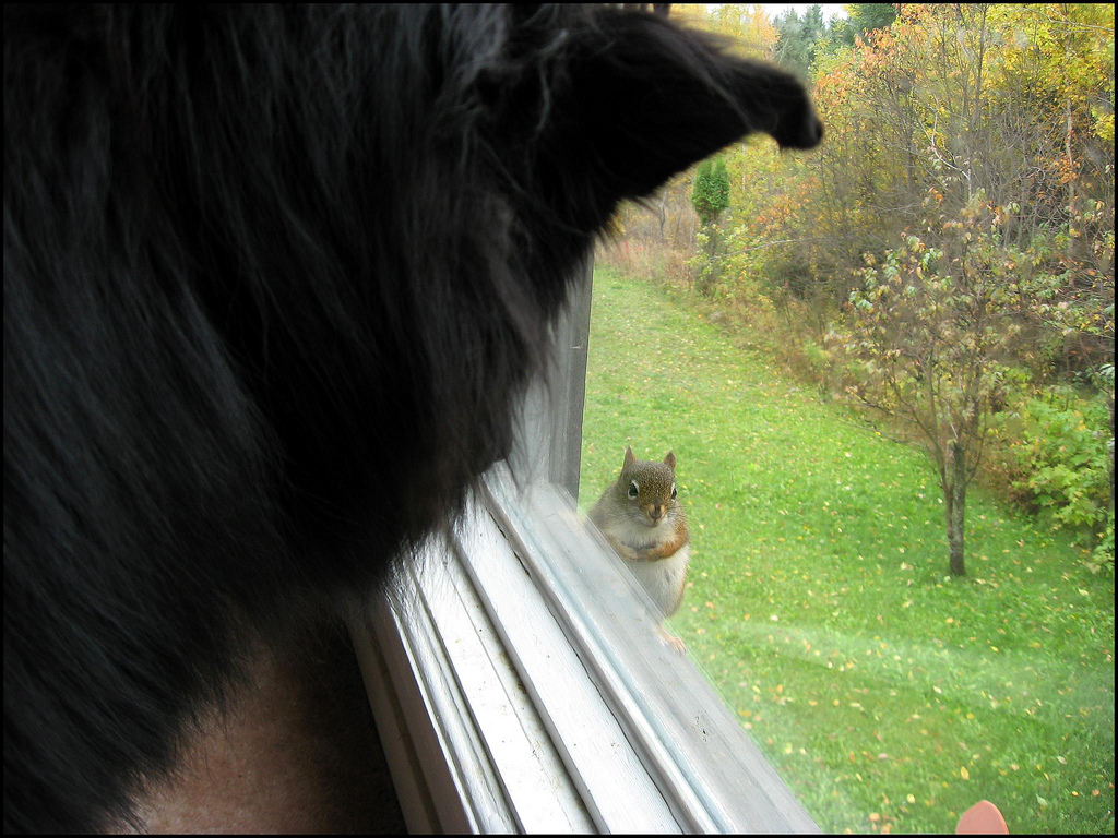 A dog or or cat can can help to deter squirrels; photo courtesy of Flickr cc/Per