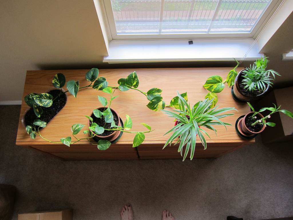 Give houseplants as much light as possible; photo courtesy of Flickr cc/ Phillip Stewart
